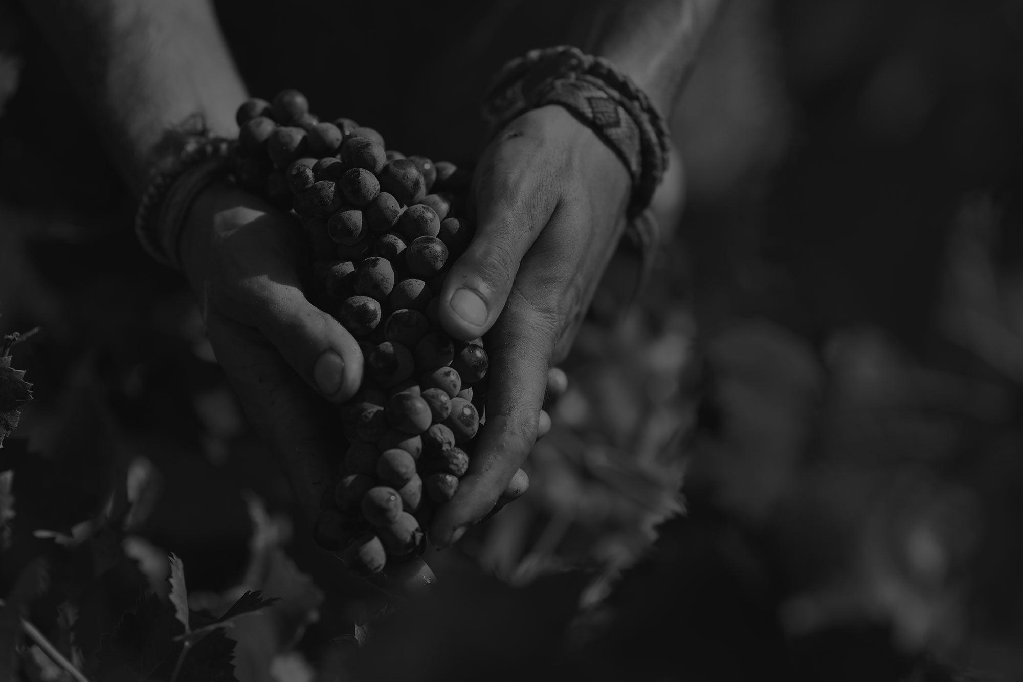vigne-lafran-veyrolles-mains